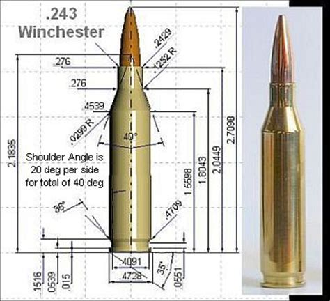 243 win cartridge guide within accurateshooter com