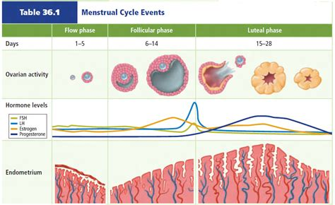 7 Hari Telat Menstruasi Siklus Menstruasi Biologi Reproduksi