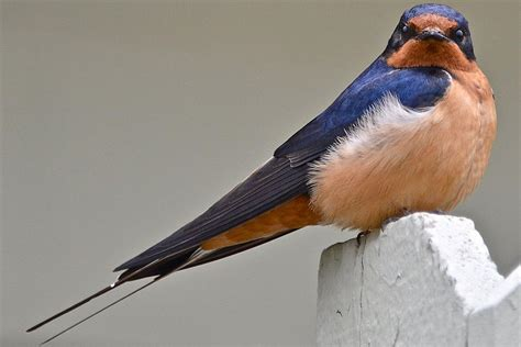 easy tips to attract swallows swifts and martins