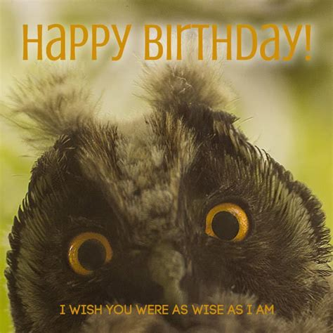 Happy Birthday I Wish You 2 Words From Cute Animals Happy Bday Cute Birthday Wishes
