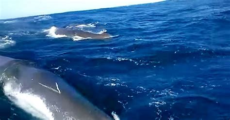 fishing boat load crossword watch nail biting moment huge whale rams tiny fishing boat