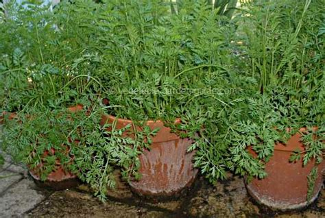 container vegetable gardening tips container gardening ideas
