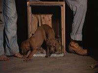dogs in where the fern grows literary landmark where the fern grows horizon tv okhorizon