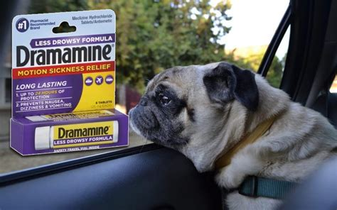 can you give a dramamine dogsbreedscenter best breeds pictures information and reviews