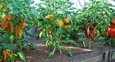 tips for vegetable garden productive vegetable gardening tips for beginners