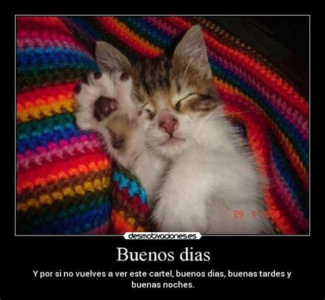 imagenes de buenos dias raza lindos gatitos con frases lindas de buenos dias en im 225 genes