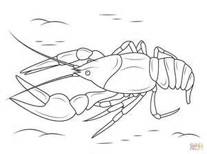 Crayfish Coloring Page danube crayfish coloring page free printable coloring pages