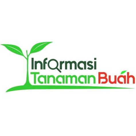 Bibit Alpukat Hibrida info tanaman buah