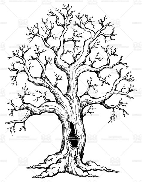 oak tree drawing oak tree drawings with roots illustrator s description