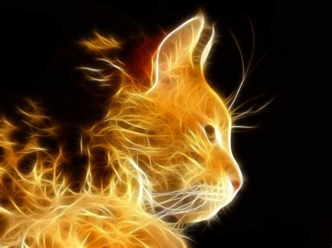 hd wallpaper cool cat cool cat backgrounds wallpaper cave
