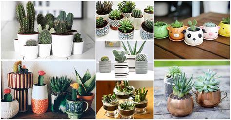 succulent facts 100 facts about succulents top 50 succulent blogs