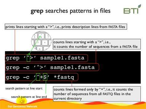 grep pattern beginning line introduction to unix command lines with exles