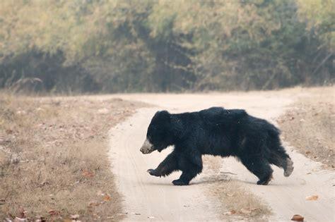 überwachungskamera für tiere die 64 besten natur und tiere hintergrundbilder