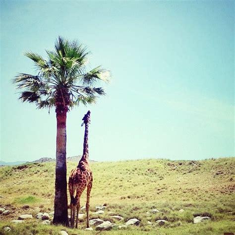 Palm Desert Botanical Gardens The Living Desert Zoo Botanical Gardens Palm Desert Ca
