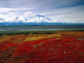 brilliant colors the top 5 national parks in alaska creations