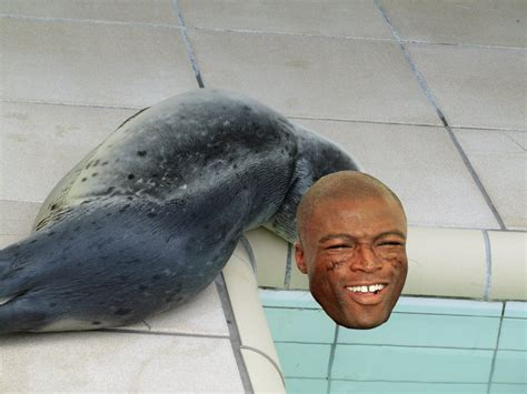 Seal Meme - seal funny