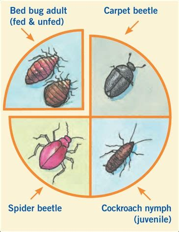 are bed bugs real 27 best images about nasty on pinterest