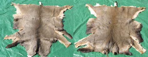 Tanned Hides For Sale Tanned Hides For Sale 28 Images Tanned Mule Deer Hides
