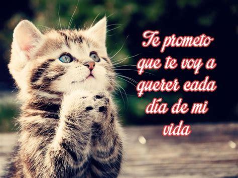 imagenes de animales orando gatitos bebes con mensajes de amor imagenes de gatitos