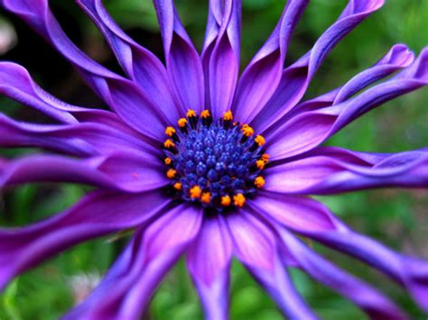 Photographic Florals by 50 Beautiful Exles Of Flower Photography Noupe