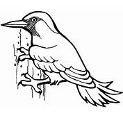 Woodpecker Bird Coloring Page  SuperColoringcom