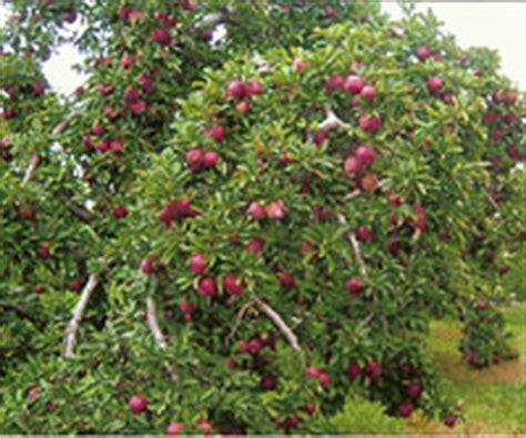 educational school  field trips  macqueen apple