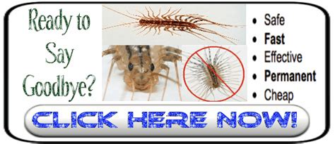 get rid of centipedes just another site