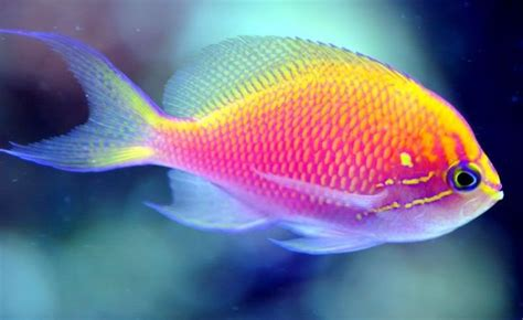 pictures of colorful fish 101 beautiful colorful fish meowlogy