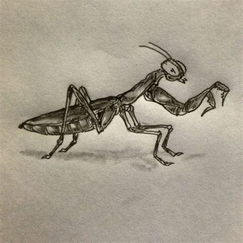 praying mantis tattoo sketch by ranz insectisdes
