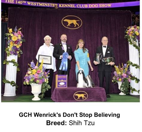 wenrick shih tzu shih tzu archives talk
