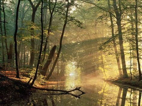 libro el bosque el desv 225 n de los libros el bosque animado de wenceslao