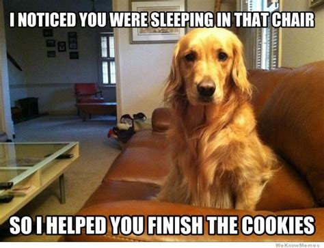 Pet Memes - 10 memes that get life with dogs oh so right