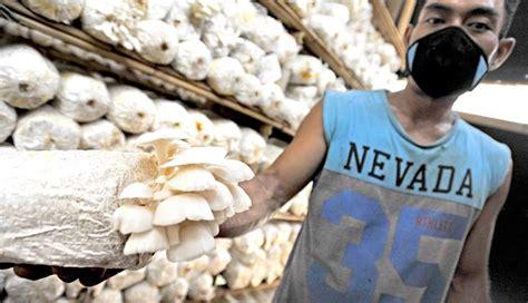 nusabalicom peluang pasar jamur  terbuka