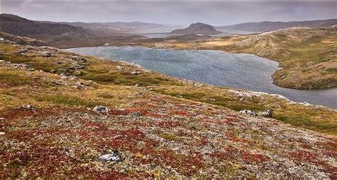 arctic tundra fall colors, northern nunavik: nikolaï