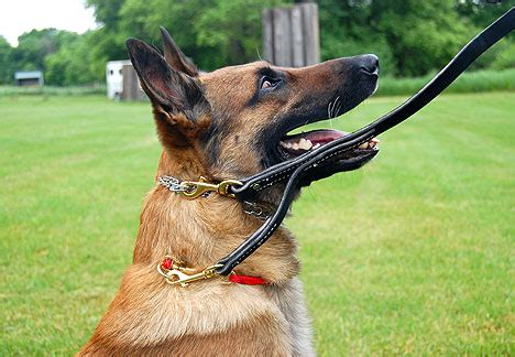 puppy prong collar where to buy prong collar page 4 german shepherd forums