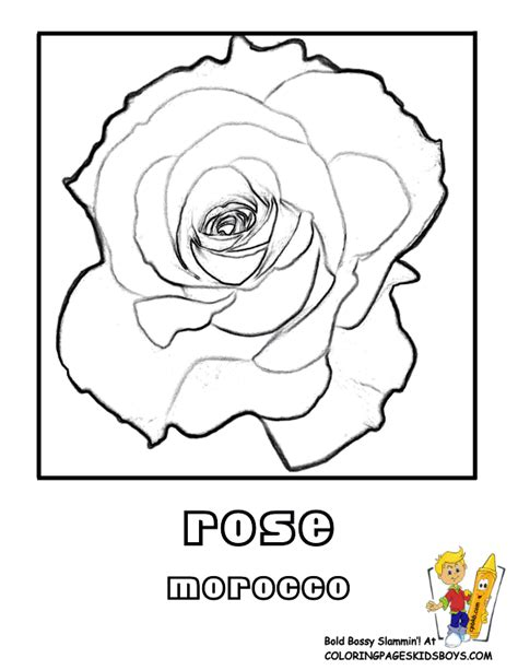 free coloring pages of frangipani pics