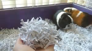 diy guinea pig bedding from shredded paper pet hacks