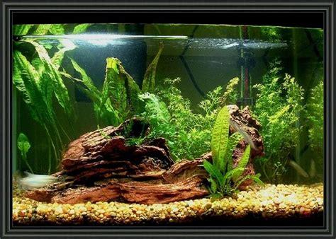 gallon aquarium decoration ideas fresh water fish