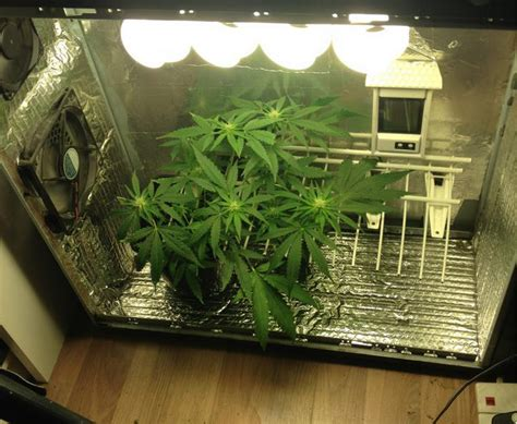 worldwide indoor marijuana grow guide the best and easy way denver ride worldwide indoor marijuana grow guide the best and easy way denver ride