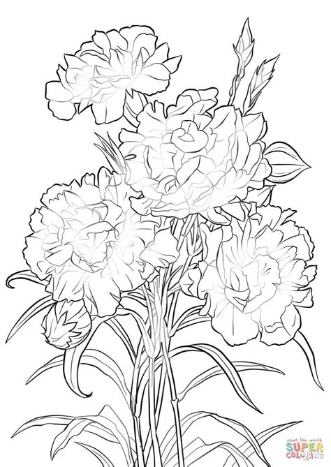 scarlet carnation coloring page free printable coloring