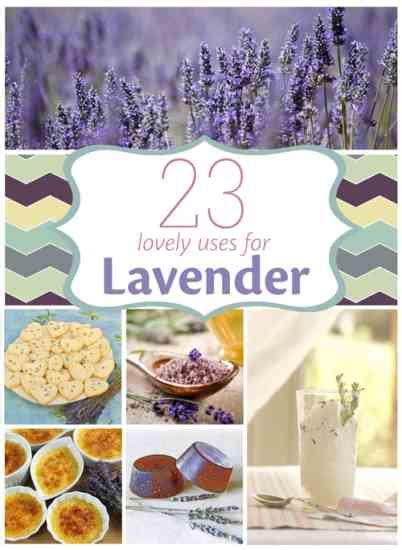 about lavender varieties recipes aromatherapy use and