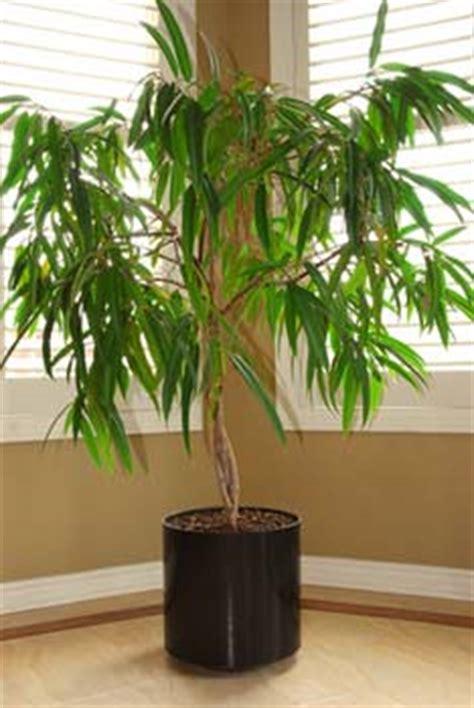 Merveilleux Bambou Plante D Interieur #5: Arroser-une-plante-dinterieur-ou-en-pot_02.jpg
