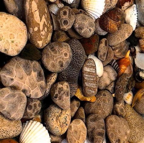 what is petoskey stone and where can you find it