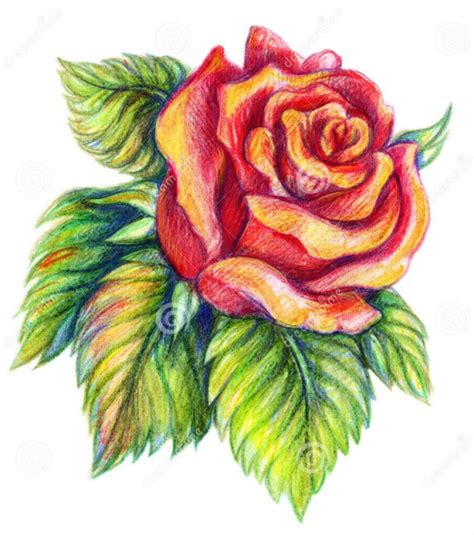 Colored Drawings 35 Beautiful Flower Drawings And Realistic Color Pencil by Colored Drawings