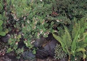Rock Garden Plants For Shade Shade Rock Garden Ideas