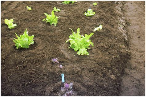 types of garden soil vegetable soil types gardening
