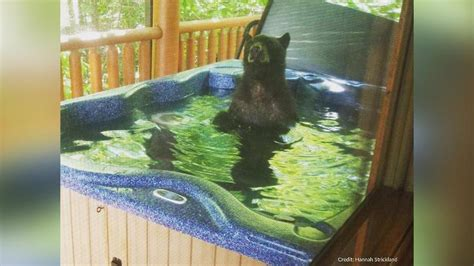 black bear caught   hot tub living   life  tennessee