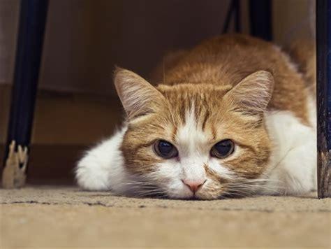 warum pinkelt meine katze in die wohnung meine katze frisst nicht mehr und ist apathisch tiermag