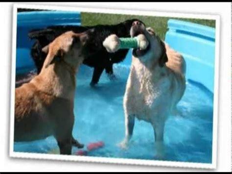 ruff house dog park 17 best ideas about pet resort on pinterest dog boarding