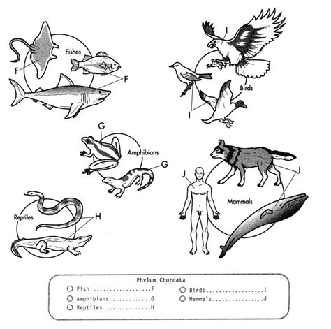 invertebrate animals coloring pages how to draw vertebrate
